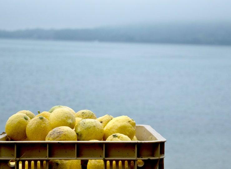 無人島ジャングルレモン
